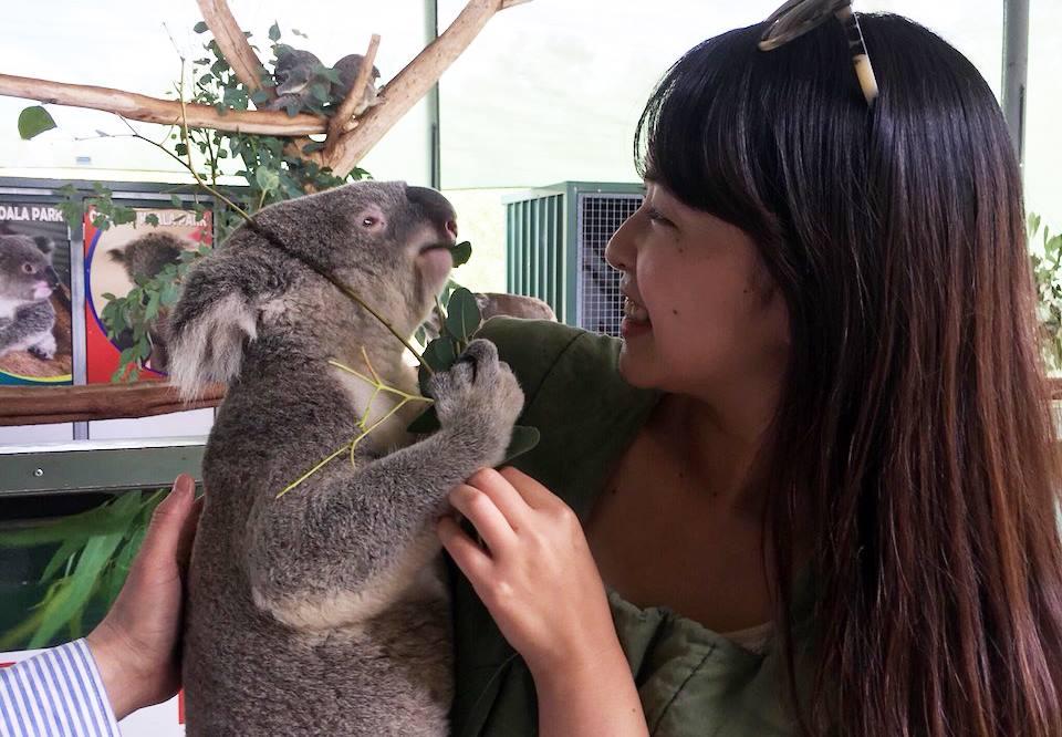 パースにてコアラを抱っこした写真